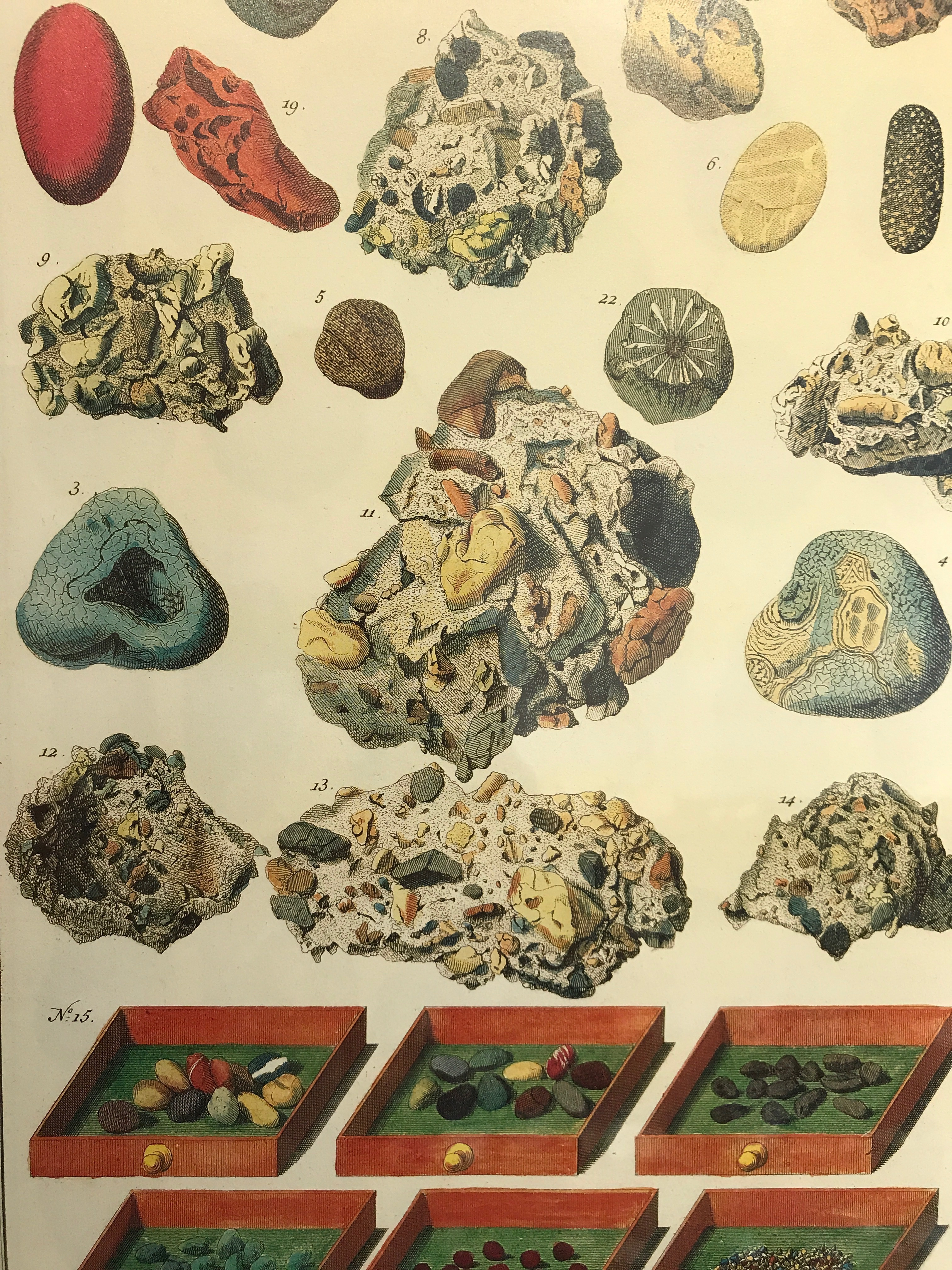 Albertus Seba Cabinet of Natural Curiosities. Poster