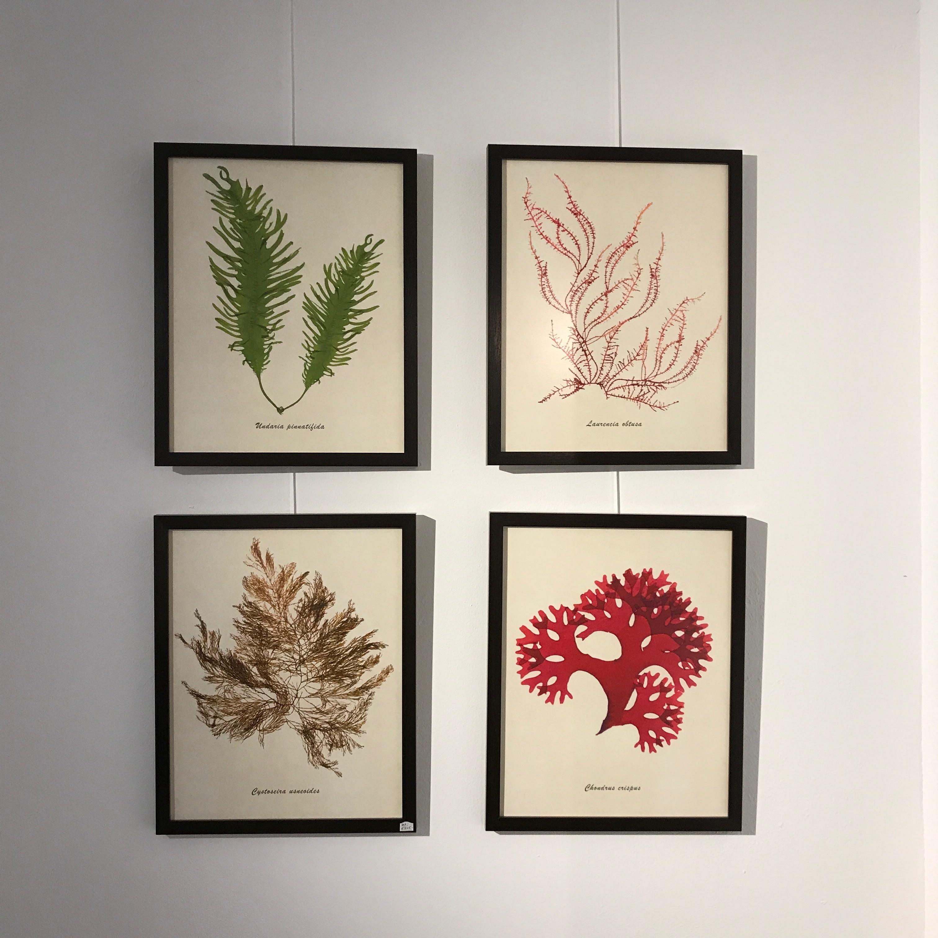Seaweed herbarium