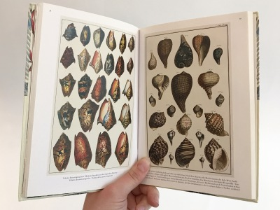 Albertus Seba\'s Cabinet of Natural Curiosities