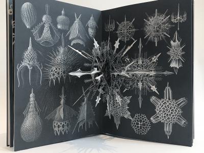 Ernst Haeckel Creatures of the deep