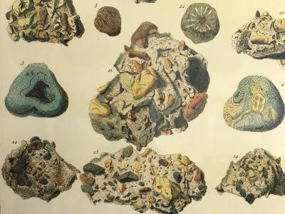 Albertus Seba Cabinet of Natural Curiosities. Poster