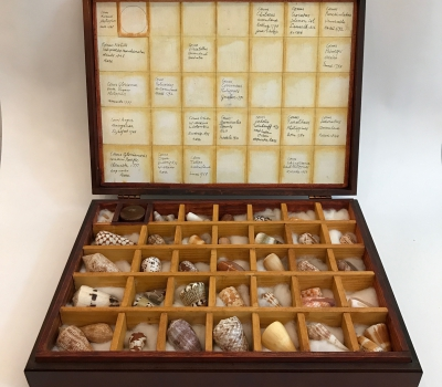 Collector specimen case
