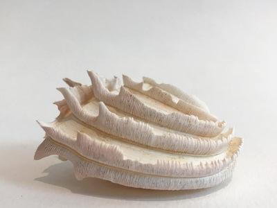 Wedding Cake Shell