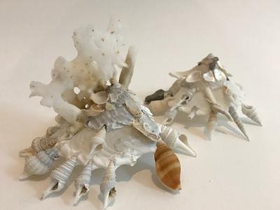Xenophora pallidula met spons